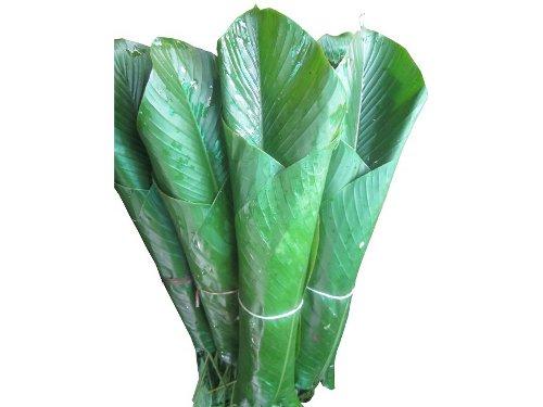 uma leaf